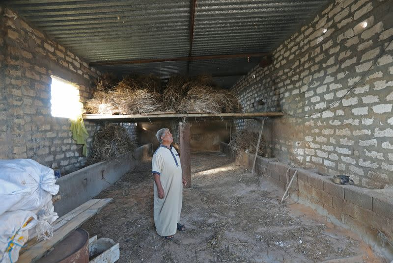 Yunis Bouzid, the owner of the farm, inspects his livestock barn, after it was destroyed from the clashes, in Ain Zara, Tripoli