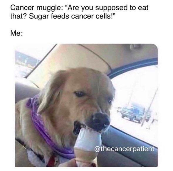 cancer muggle: are you supposed to eat that? sugar feeds cancer cells. image of dog eating ice cream cone
