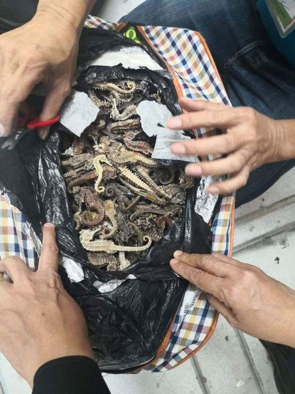 3 Chinese nationals nabbed for smuggling dried seahorses out of Cebu