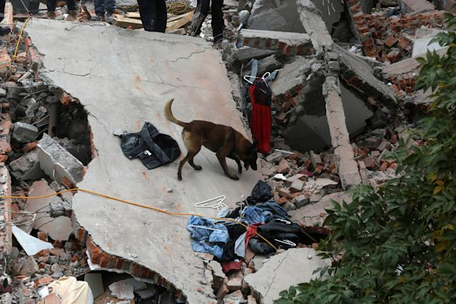 <p>A rescue dog searches for people among the rubble of a collapsed building after an earthquake hit Mexico City, Mexico, on Sept. 19, 2017. (Photo: Claudia Daut/Reuters) </p>