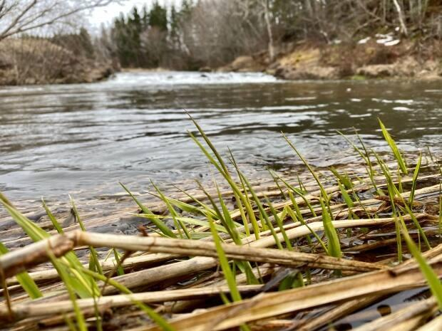 River watchers help the provincial government keep track of water quality in the province. (Jane Robertson/CBC - image credit)