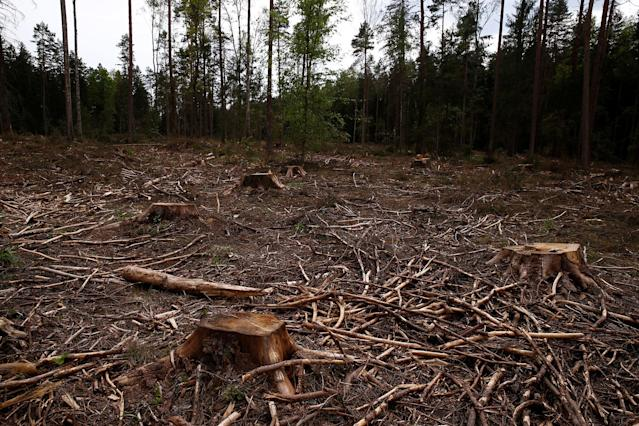 <p>Logged area is pictured near a site where environmental activists take action in the defence of one of the last primeval forests in Europe, Bialowieza forest, Poland, May 24, 2017. (Kacper Pempel/Reuters) </p>