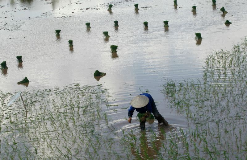 Vietnam rice exports seen up 6% this year to 6.75 million tonnes - food association