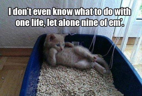 meme image: cat laying down in litter box. meme text: I don't even know what to do with one life, let alone nine of em'