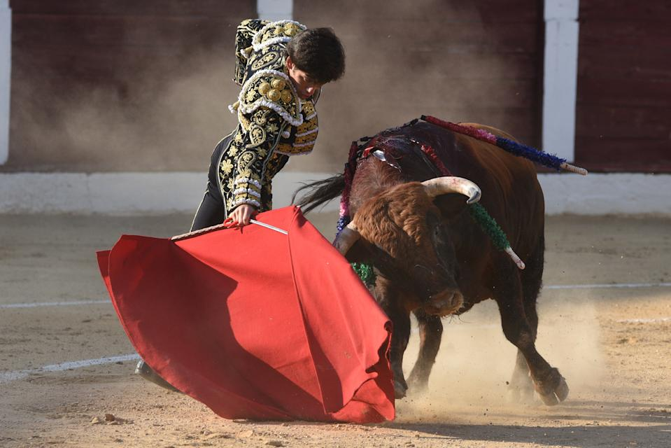 Spanish matador, Jos� Garrido performs with an Albarreal ranch fighting bull during the La Bajada de Jes�s festival at the Municipal bullring in Almaz�n. (Photo by John Milner / SOPA Images/Sipa USA)