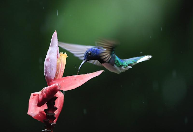 Costa Rica is renowned for its hummingbirds - getty