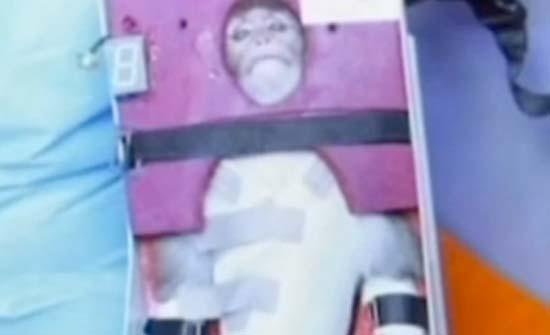 Iranian space officials announced Monday (Jan. 28, 2013) that they have successfully launched a live monkey into space.