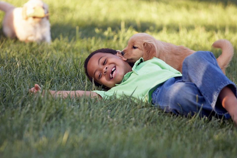 puppy kissing boy who is laying in grass