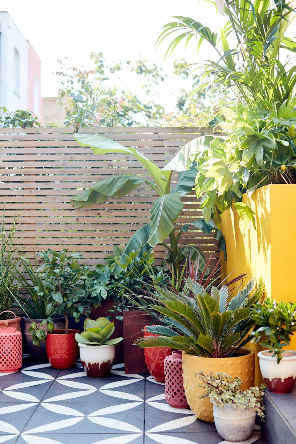 foliage plants: tropical palms and container plants