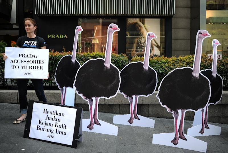 47781f0835e70a Animal rights group takes ostrich fight into Prada. AFP • April 28, 2016.  Manager of international operations for PETA, Ashley Fruno, displays a sign  next ...