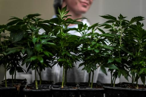The bump in sales has not been enough to bolster the cannabis sector in Canada, however, as it struggles just two years after the drug was legalized