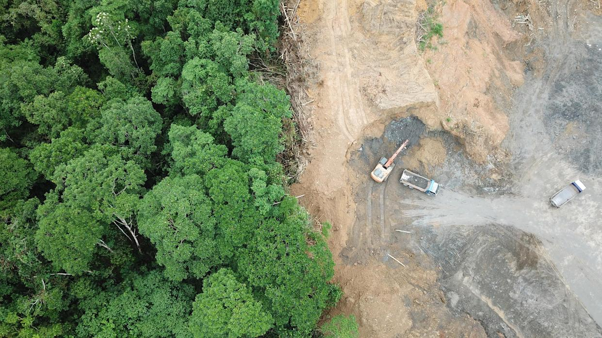 Logging. Aerial drone view of deforestation environmental problem in Borneo