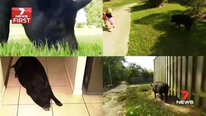 Shorty loves to go for walks, sleep indoors and do tricks for treats. Source: 7 News