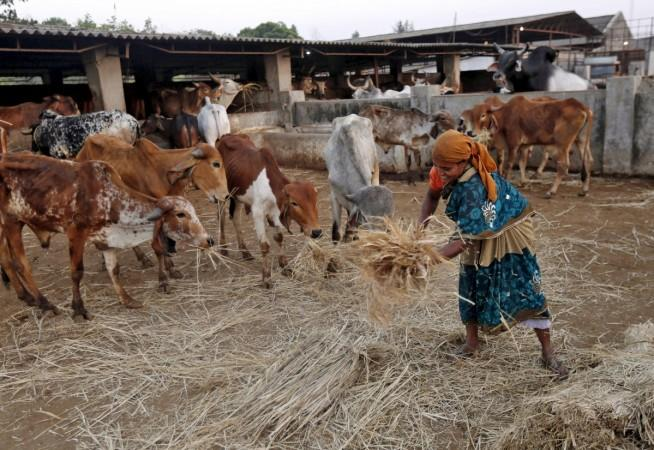 cow slaughter, cow slaughter ban, beef ban