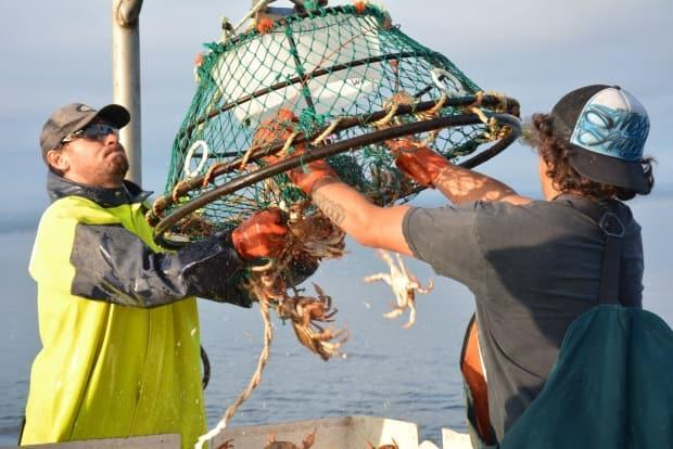 Listuguj First Nation fisher Chris Wilmot, left, fishes for rock crab. The Mi'kmaw community has reached an agreement with Ottawa to collaborate on fishing regulations. (Rezolution Pictures/Lisa M. Roth - image credit)