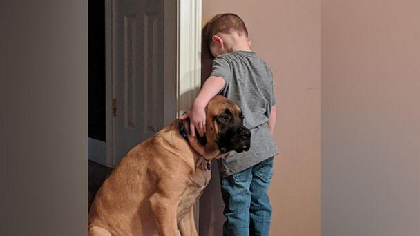 PHOTO: Jillian Smith of Norwalk, Ohio, shared the image last month of her son Peyton and their English Mastiff, Dash, onto Facebook where it''s been shared 43,000 times. (Courtesy Jillian Smith)