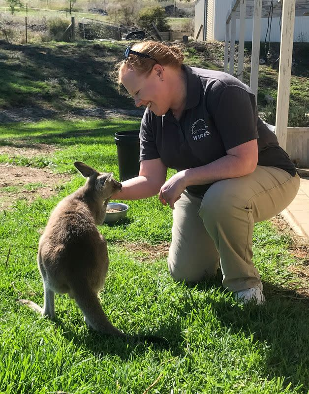 WIRES carer Christie Jarrett pats Daisy, a rescued orphaned eastern grey kangaroo, at her home in Bathurst