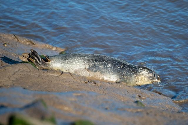 Seal pups released back into the wild