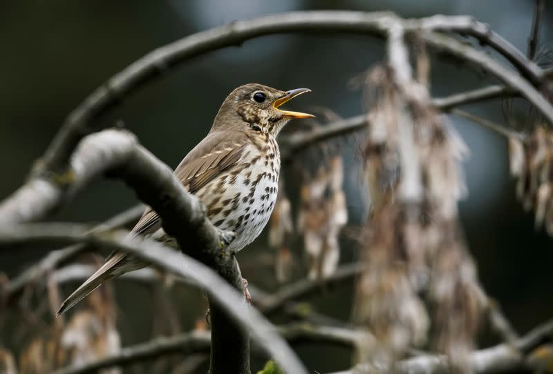 France suspends controversial glue-trapping of songbirds