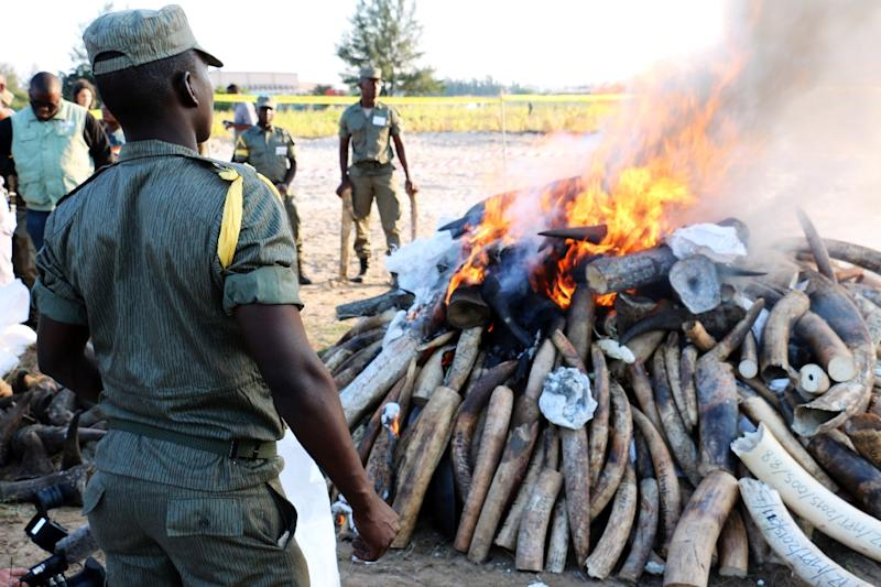 Mozambican authorities watch as a pile of ivory and rhino horns, part of 2.6 tons of ivory and rhino horns seized in the past years from poaching in Mozambique, burns in Maputo on July 6, 2015