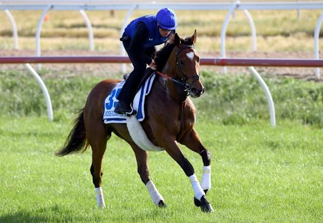 Last year's Melbourne Cup winner Cross Counter is put through his paces during Monday trackwork ahead of Tuesday's race (AFP Photo/William WEST)
