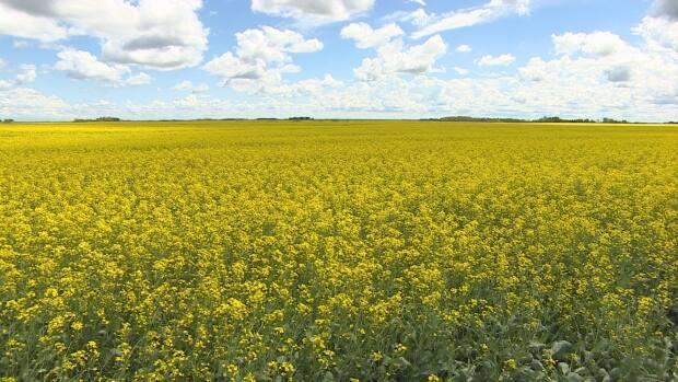 The majority of harvesting is done in the province.  (Rob Kruk/CBC - image credit)