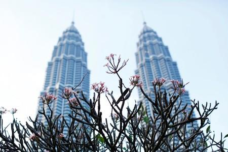 FILE PHOTO: Flowers bloom in front of the Petronas Towers in Kuala Lumpur