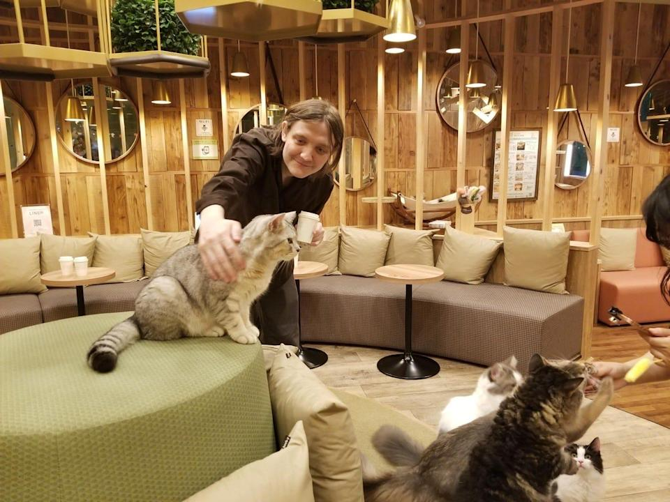 David Kirk Ginder at a cat cafe in Tokyo in 2018.