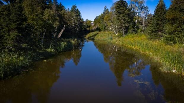 In total, there are 1,719 individual natural assets in the new inventory, including Wright's Creek.  (Shane Hennessey/CBC - image credit)