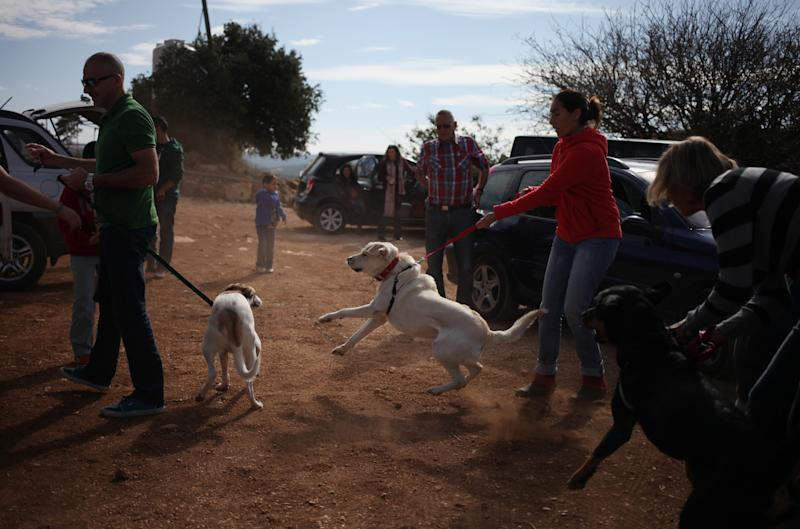 In this Friday, Nov. 22, 2013 photo, a group of dog owners arrive at an open park to walk and play with their rescued dogs on a picnic with rescued dogs in Ajloun, Jordan. Dog breeding coupled with dognapping is a thriving business in Jordan, where lax laws call for only a $7 fine for violators and police remain hesitant to pursue those suspected of animal abuse. Activists have campaigned for years for increased penalties, but lawmakers seem uninterested to pursue it in a culture where animal abuse remains rampant. (AP Photo/Mohammad Hannon)