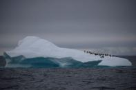 FILE PHOTO: A group of chinstrap penguins walk on top of an iceberg floating near Lemaire Channel, Antarctica