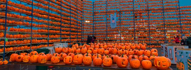 Tables of carved jackolanterns with rows of scaffolding lined with pumpkins in the background