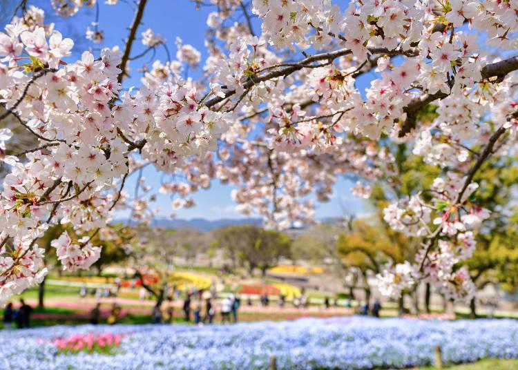 The spacious park is beautifully colored with seasonal flowers