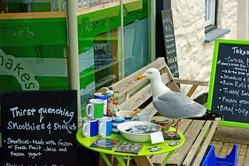 Seagull permitting, of course... (Photo: Peter Llewellyn via Getty Images)
