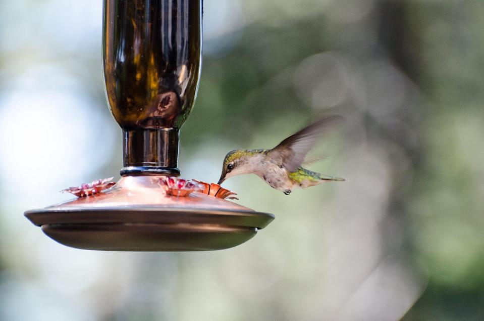 "<p>Hang at least one bright red hummingbird feeder in your yard and <a href=""https://www.popsugar.com/home/Hummingbird-Food-Recipe-43689483"" class=""link rapid-noclick-resp"" rel=""nofollow noopener"" target=""_blank"" data-ylk=""slk:fill it with a simple sugar and water mixture"">fill it with a simple sugar and water mixture</a> (one part sugar to four parts water) to have the hummers humming. Opt for a few feeders to keep one bird from getting too territorial and never add red dye or honey to the mixture as both can be toxic for the birds.</p>"