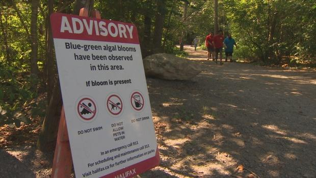 A blue-green algae advisory sign is shown at Lake Micmac in Dartmouth, N.S. Authorities are now investigating a possible blue-green algae bloom at Chocolate Lake in Halifax.  (David Laughlin/CBC - image credit)
