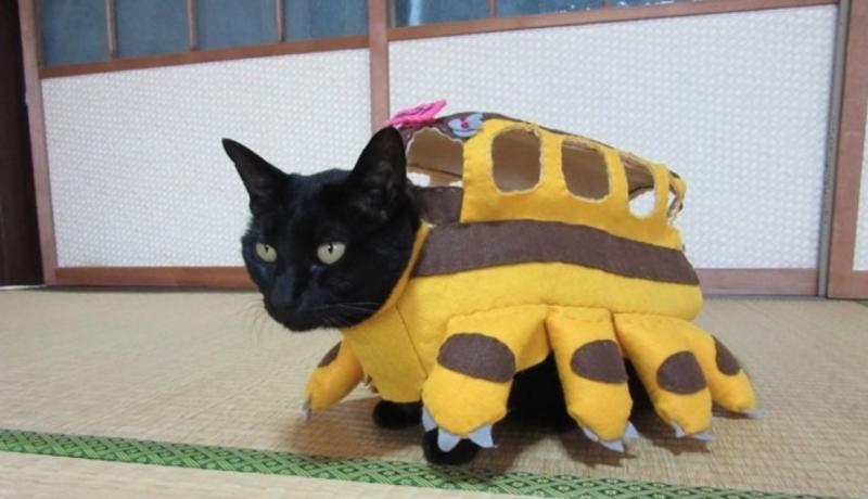 Cat cosplayer from Japan, Chocola, whose owner has hand-made 114 costumes for it, as the Catbus from My Neighbour Totoro. (Photo: Twitter/@kigurumicyokor1)