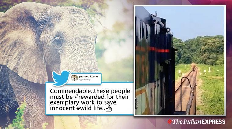 train stop for elephant to cross, duars elephant train tracks, elephant train traccks, man elephant conflict, train drivers stop train elephant to cross, viral videos, good news, indian express