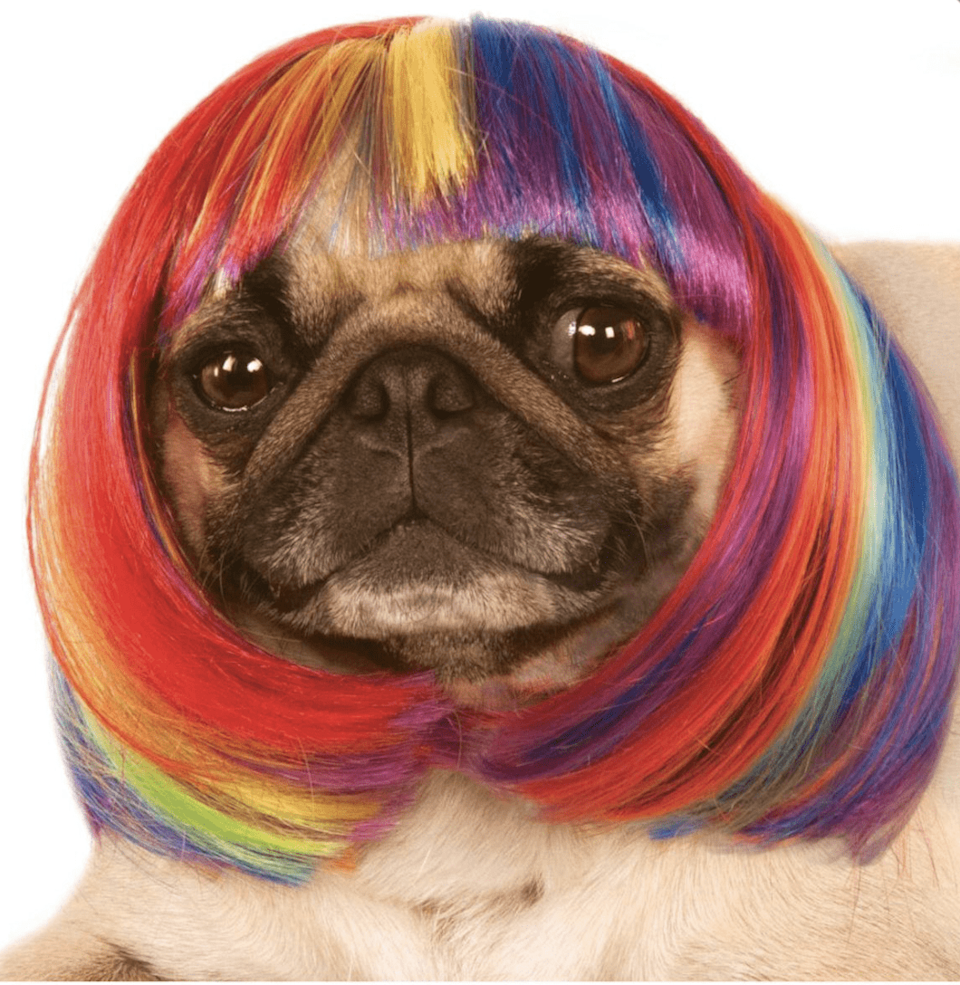 """<p>Glam never looked so good.</p><br><br><strong>Pet Costume Center</strong> Rainbow Bob Wig , $6.13, available at <a href=""""https://petcostumecenter.com/product/rainbow-bob-wig-dog-cat-costume/"""" rel=""""nofollow noopener"""" target=""""_blank"""" data-ylk=""""slk:Pet Costume Center"""" class=""""link rapid-noclick-resp"""">Pet Costume Center</a>"""