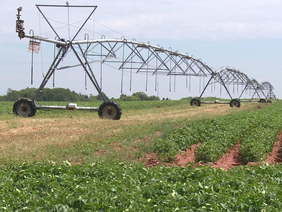 Relatively few farms on P.E.I. currently have irrigation systems. (CBC - image credit)