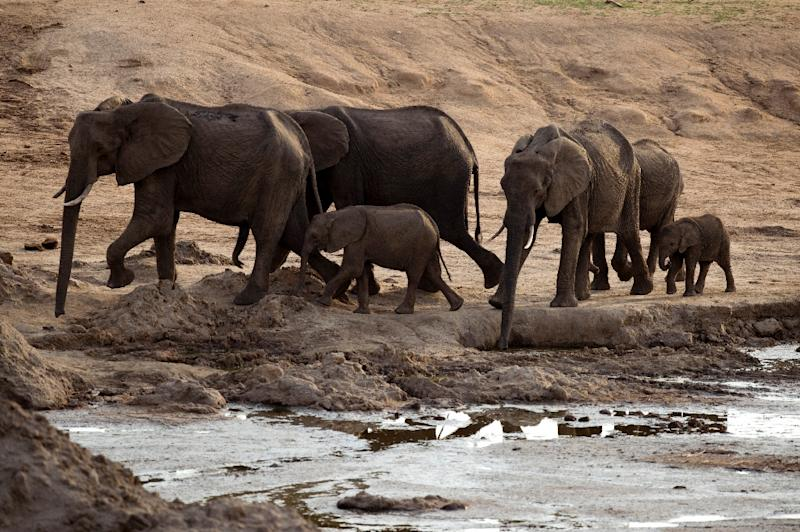 Zimbabwe has sold nearly 100 elephants to China and Dubai for a total price of $2.7 million over six years, the country's wildlife agency said Wednesday, citing overpopulation