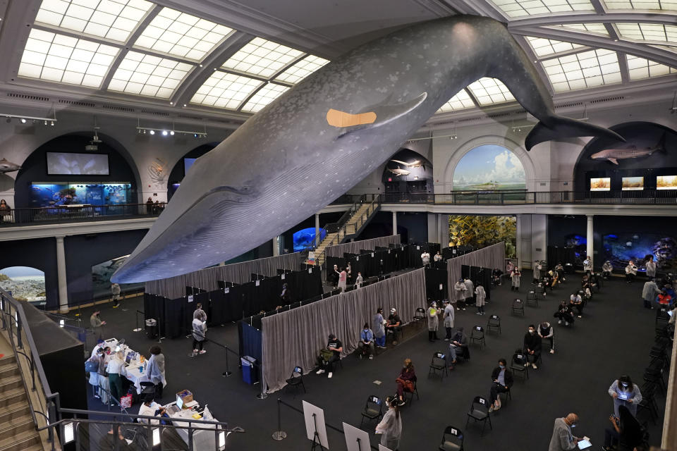 People rest in the observation area, at right, after receiving COVID-19 vaccinations under the 94-foot-long, 21,000-pound model of a blue whale, in the Milstein Family Hall of Ocean Life, at the American Museum of Natural History, in New York, Friday, April 23, 2021. Appointments are no longer necessary at any of the coronavirus vaccination sites run by New York City. New York City Mayor Bill de Blasio announced Friday that anyone eligible for the vaccine could walk up to any of the city's mass vaccination sites and get a shot. The change comes as supplies of the vaccine have increased. (AP Photo/Richard Drew)