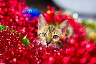 """<p> There's nothing more uncomfortable than a cat staring at your friends and family throughout a Zoom call. </p> <p><a href=""""http://media1.popsugar-assets.com/files/2020/12/21/715/n/1922507/30c422bbb49e4f3c_bermix-studio-1rqGD5kFJyA-unsplash/i/Download-Zoom-background-image-here.jpg"""" class=""""link rapid-noclick-resp"""" rel=""""nofollow noopener"""" target=""""_blank"""" data-ylk=""""slk:Download Zoom background image here."""">Download Zoom background image here.</a> </p>"""