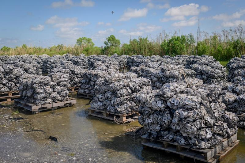 Wood pallets loaded with oyster shells ready to go into the water at the Coalition to Restore Coastal Louisiana oyster shell collection center in Buras, Louisiana., on May 21, 2019. (Photo: Emily Kask for HuffPost)