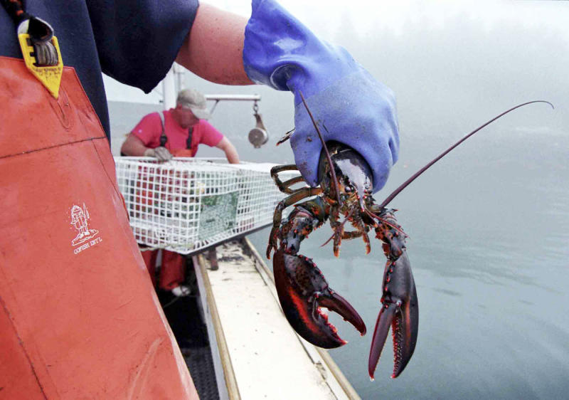 FILE-In this undated file photo, a sternman holds a lobster caught off South Bristol, Maine. California has its raisins, Florida has its oranges and Massachusetts has its cranberries. In the coming months, a new marketing strategy will be launched that aims to bolster the brand and sales of Maine lobster.(AP Photo/Robert F. Bukaty, File)