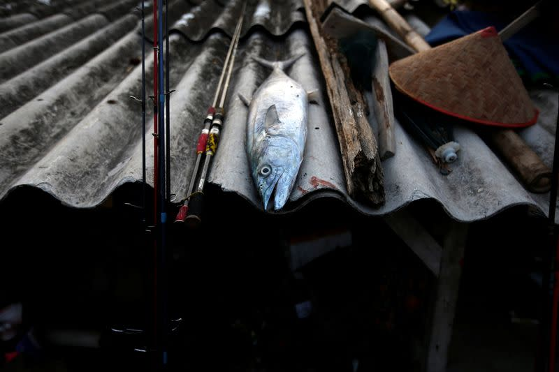 A fish caught by fisherman lies on a roof at Tambaklorok village in Semarang