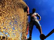 A worker scatters cropped soybeans in a truck in Brazil's Rio Grande do Sul, the third-largest state producer of grain in the country