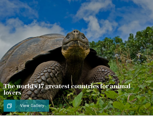 The world's 17 greatest countries for animal lovers