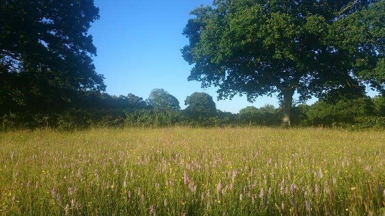 Long grass and wildflowers beneath blue sky and tree.