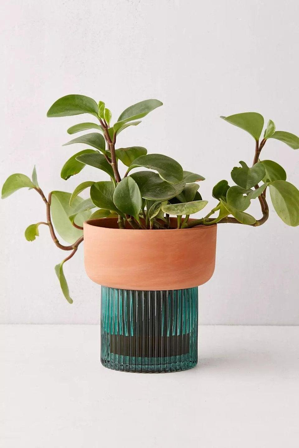 """<h2>UO Izzie Self-Watering Planter</h2><br><strong>Best For: Function + Decor</strong><br>Urban Outfitters never fails to provide us with products that are the perfect mix of beauty and brains. This sea green ceramic glass planter will keep your buds properly hydrated all day long and looking dressed to the nines.<br><br><em>Shop</em> <strong><em><a href=""""http://urbanoutfitters.com"""" rel=""""nofollow noopener"""" target=""""_blank"""" data-ylk=""""slk:Urban Outfitters"""" class=""""link rapid-noclick-resp"""">Urban Outfitters</a></em></strong><br><br><strong>Urban Outfitters</strong> Izzie Self-Watering Planter, $, available at <a href=""""https://go.skimresources.com/?id=30283X879131&url=https%3A%2F%2Fwww.urbanoutfitters.com%2Fshop%2Fizzie-self-watering-planter"""" rel=""""nofollow noopener"""" target=""""_blank"""" data-ylk=""""slk:Urban Outfitters"""" class=""""link rapid-noclick-resp"""">Urban Outfitters</a>"""